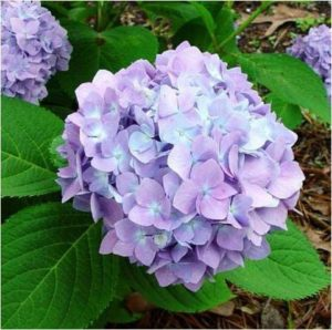 The Westborough Garden Club is accepting applications for scholarships.