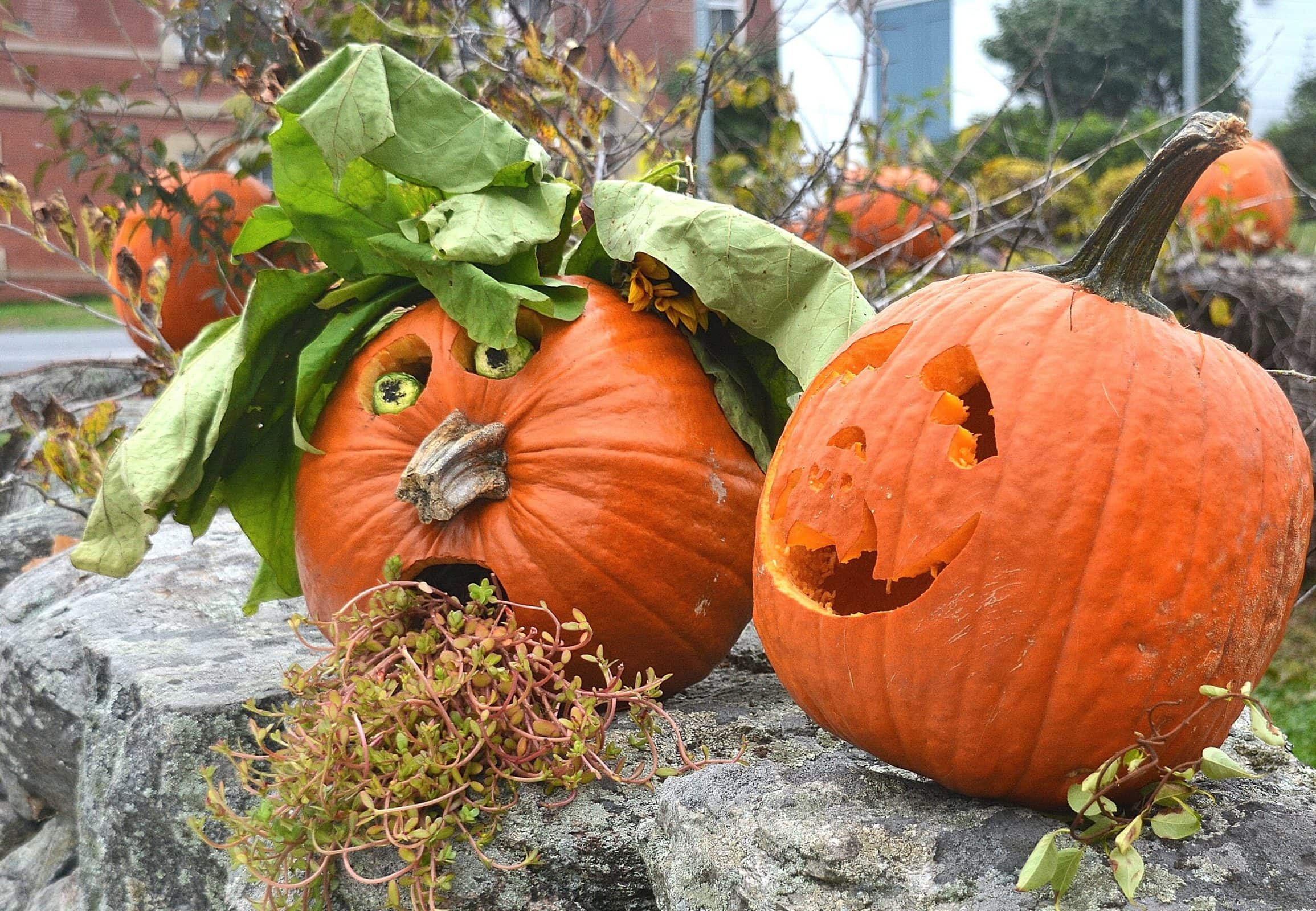 Some of Southborough Rotary Club's Pumpkin Stroll entries are garnered with greenery.