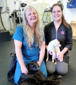 Barb Smith, left, and Lindsay Provencher of Companion Pet Sitting and K-9 Hydrotherapy, with Smith's dogs Maya and Toby Photo/submitted