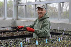 Northborough resident and CHP Volunteer Team Leader George Bender helps with transplanting seedlings during the spring 2017 season. Photo/submitted