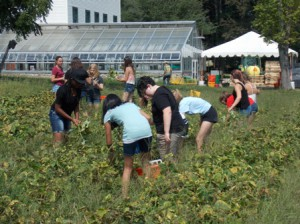 Ninth-graders help harvest beans and remove dying plants on the farm.