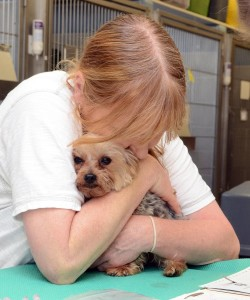 The Tufts University Pet Loss Support Hotline can help owners after the loss of a beloved pet. (Photo/Andy Cunningham/Tufts University)