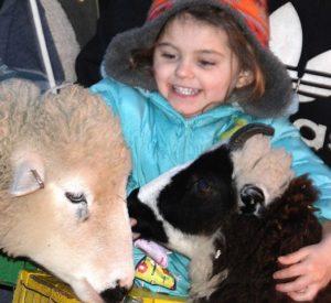 Aubrey Aponte, 4, pets sheep at the Main Street Bank parking lot.
