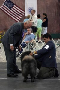 Judges examine a dog at last year's show. (Photos/submitted)