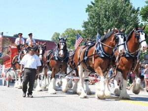 An eight-horse Clydesdale hitch travels on Main Street.