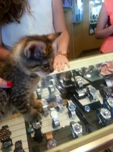 Mavis, a 10-week-old kitten plays on the store's watch display.
